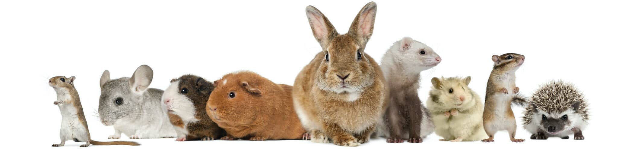 Rodents and Rabbits